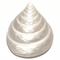 Trocas Pearl Muschel 5,5 cm