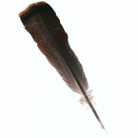 Räucherfeder Truthahn Schwanz 34-42 cm