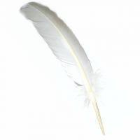Räucherfeder Truthahn weiss ca. 31-37 cm